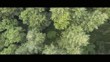 IL PROGETTO TRACE Il canto degli alberi per salvare il Pianeta (2)
