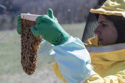 e'-ancora-possibile-salvare-le-api-the-mag-fotografia-matteo-bianchi (5)