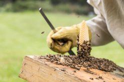 e'-ancora-possibile-salvare-le-api-the-mag-fotografia-matteo-bianchi (6)