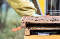 e'-ancora-possibile-salvare-le-api-the-mag-fotografia-matteo-bianchi (8)