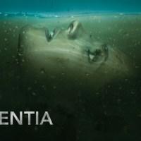 Third-episode verdict: Absentia (AXN)