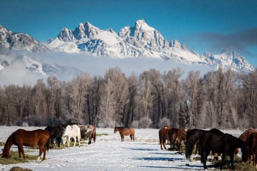 Jackson Hole is renowned for its amazing landscape. Photo: Jackson Hole Mountain Resort. You think Jackson Hole is only for Extreme Skiers? Think again. Also a haven for beginners now.