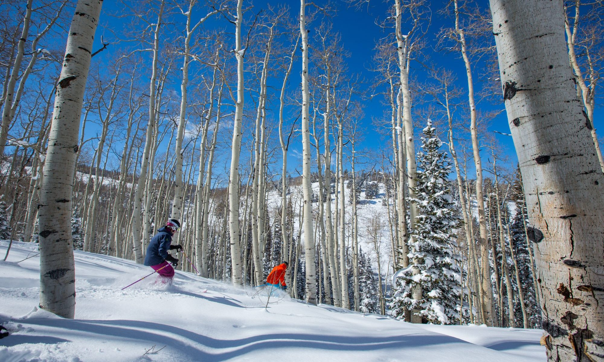 Skiing through the glades at Deer Valley Resort. Deer Valley who was awarded Best US Ski Resort by the World Ski Awards for the sixth year, opens this Saturday December 8th.