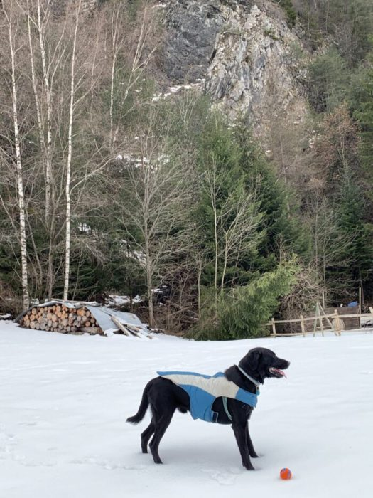 If you want to take your pooch to the Continent, act now! Here Ozzy poses with his jacket and preferred ball. Photo: The-Ski-Guru. EU Regulations for travelling with your dog if we have a 'No Deal Brexit'.