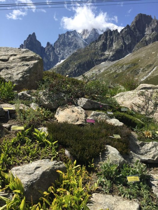 The Saussurea botanical garden goes up through a path up the mountain. I recommend going to see it, it is included with your ticket of Skyway Monte Bianco. Aiguille du Midi vs Punta Helbronner – which one you should do?