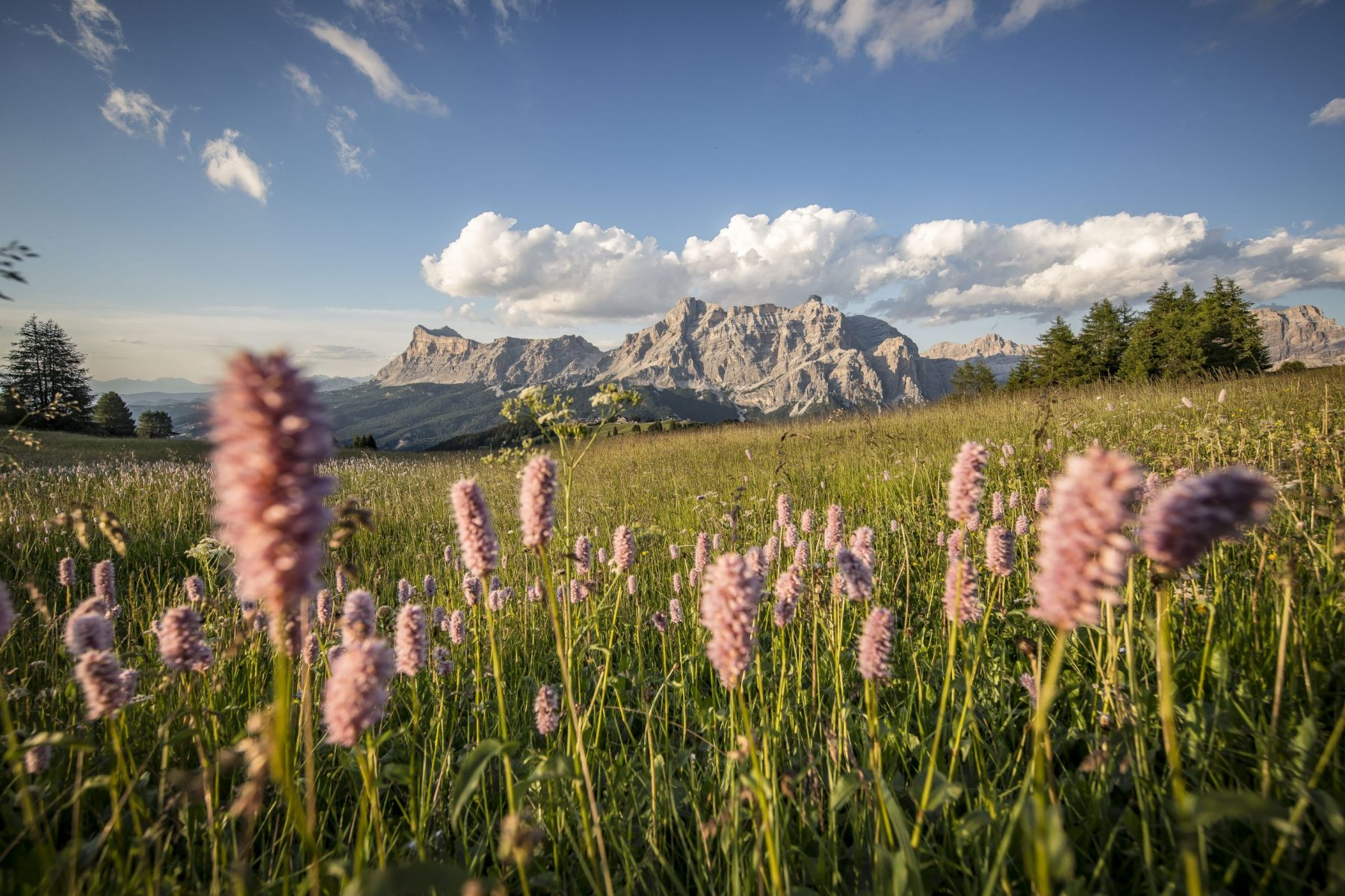 Alta Badia. Sas dla Crusc Lavarela. Photo: Ffreddy Planinschek. Alta Badia Tourism Office. Planning your summer in the mountains of Alta Badia.