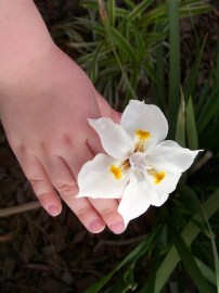 Lily hand with Lily - Copy