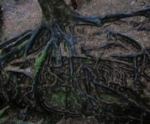 tree-roots