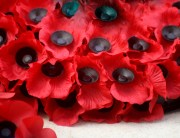 A bunch of bright red poppies