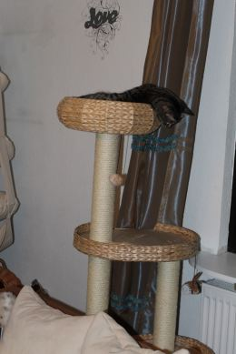 the3cats_2013_02_13_9666