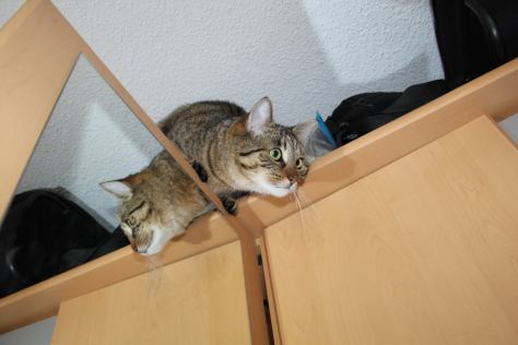 the3cats_2013_03_02_0704