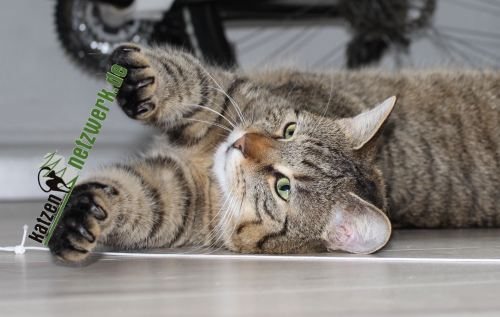 the3cats_2013_04_13_2625