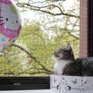 Linus: Der Ballon gehört zu mir Teil 2
