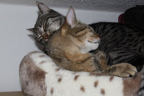 _the3cats_2013_05_26_7159