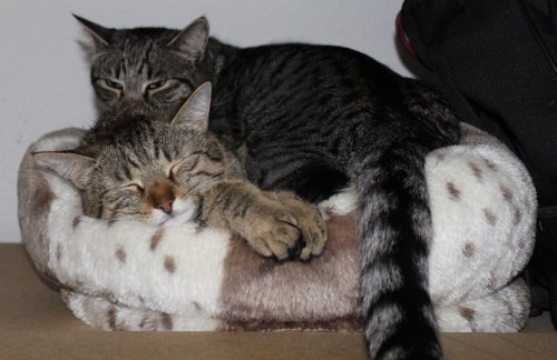 _the3cats_2013_05_26_7202