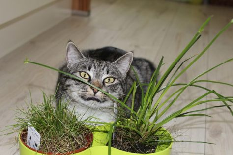 _the3cats_2013_05_27_7966