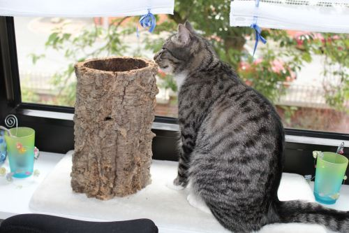 _the3cats_2013_08_22_0943
