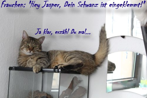 _the3cats_2013_08_24_1221