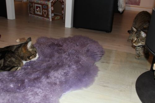 the3cats_2013_09_29_3125