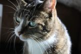 _the3cats_2013_10_19_7340