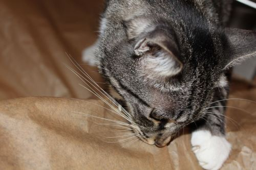 _the3cats_2013_10_23_7841