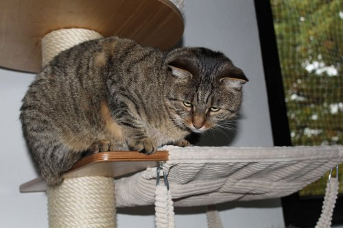 the3cats_2013_11_23_2086