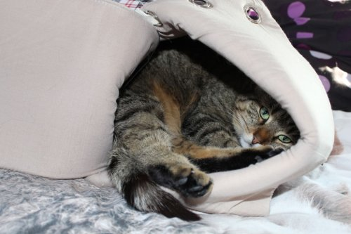 _the3cats_2014_03_13_1745