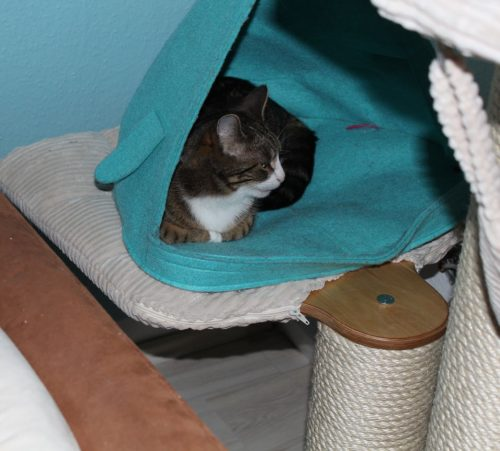 _the3cats_2014_03_16_1776