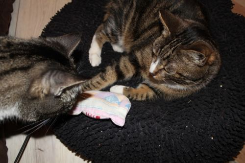 _the3cats_2014_03_26_2129