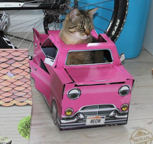 _the3cats_2014_07_18_9434