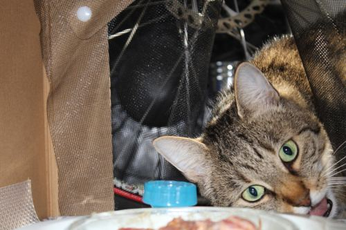 _the3cats_2014_08_03_9842
