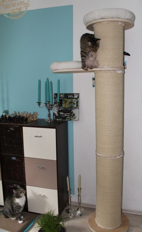 _the3cats_2014_08_17_0385