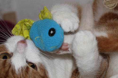 _the3cats_2014_09_25_4268