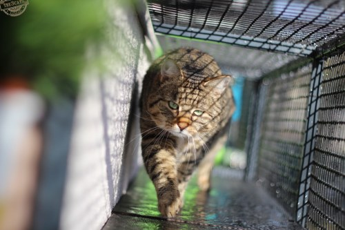 _the3cats_2015_03_21_1514