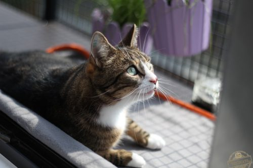 _the3cats_2015_04_05_3279