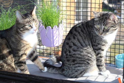 _the3cats_2015_04_08_3957