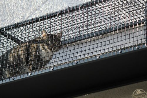 _the3cats_2015_04_09_4259