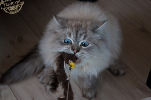 _the3cats_2015_12_28_2385