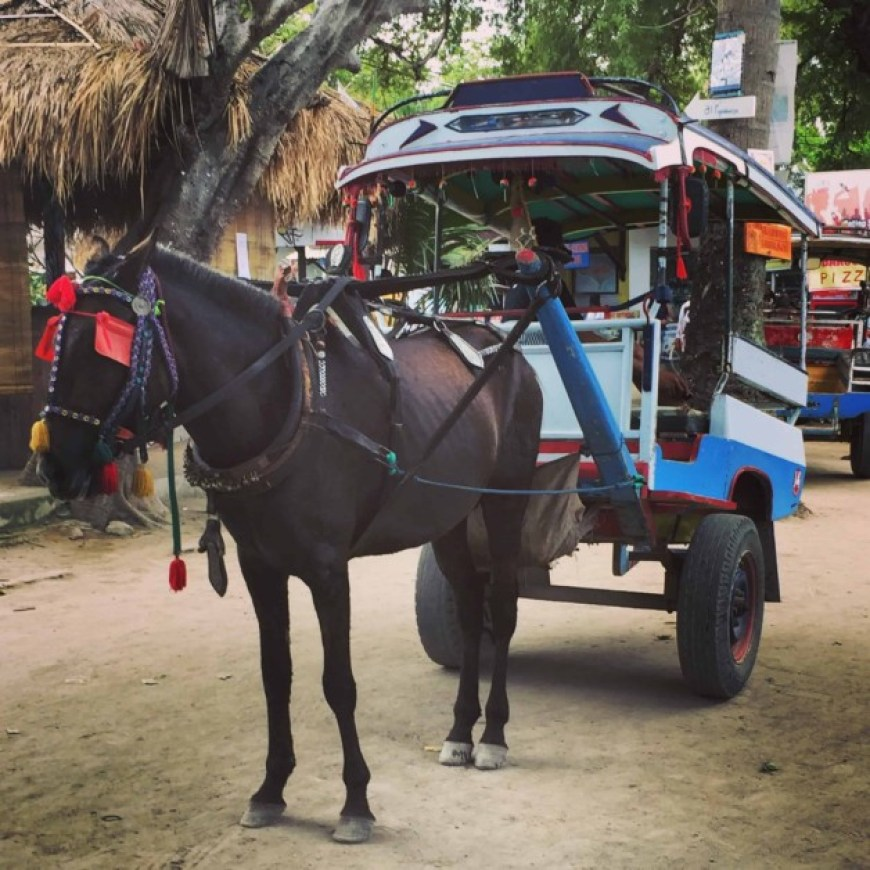 horse carts gili islands