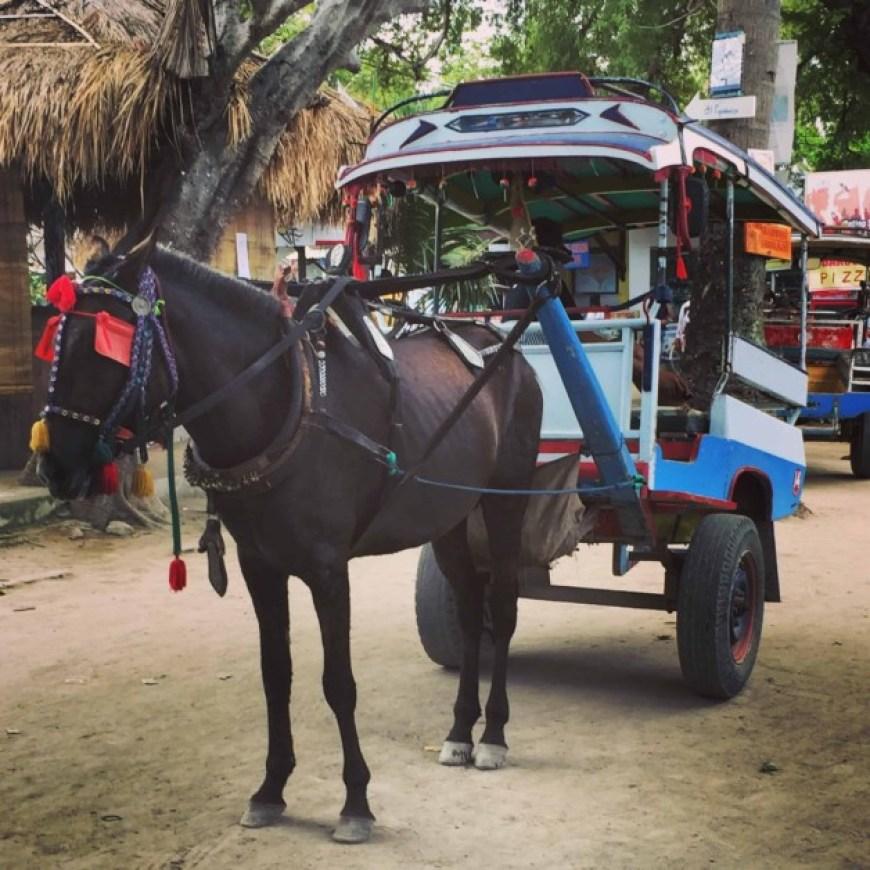 horse carts gili islands