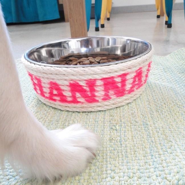 DIY Gamelle pour chien