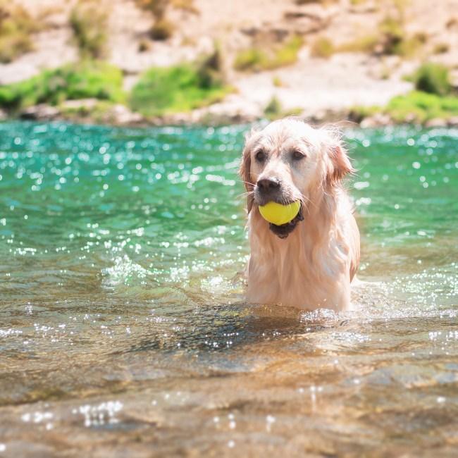 Jouet eau pour chien