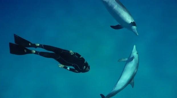best spearfishing fins