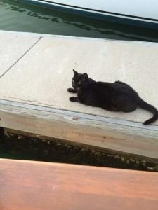 Mazatland Kitty The Adventure Travelers