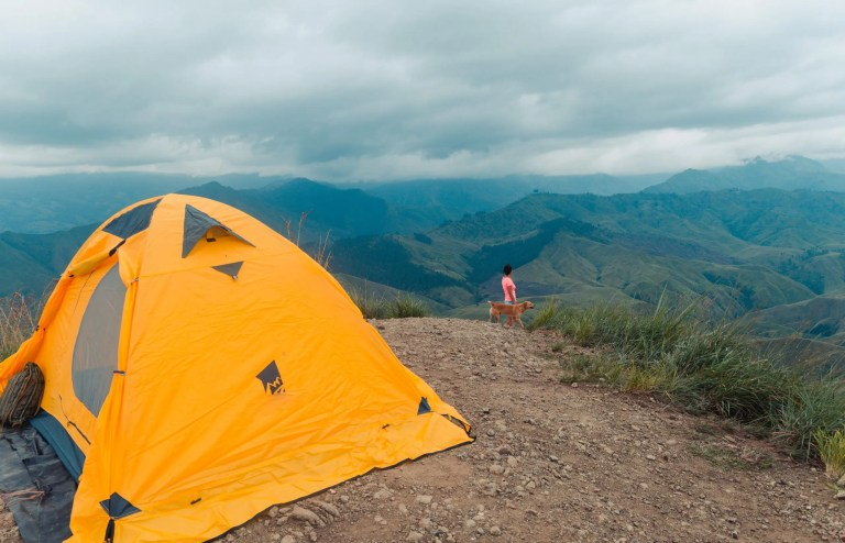 Caming Dog with Tent in Mountains