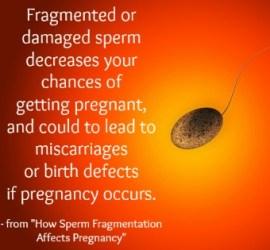 fragmented sperm getting pregnant