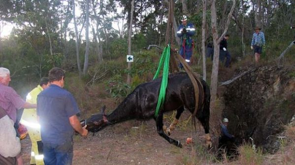 Horse rescued from abandoned mine shaft fall