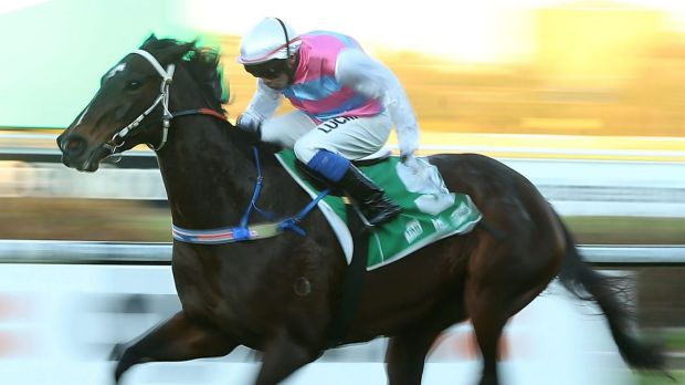 King for a day: Paul King rides Two Blue to victory at Rosehill on June 27.