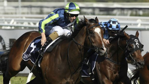 Keen eye: David Hayes will focus on the autumn with Blue Sapphire winner Keen Array.
