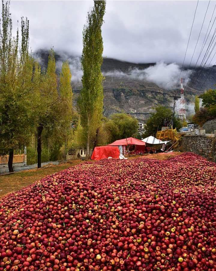 Apples - Hunza Valley